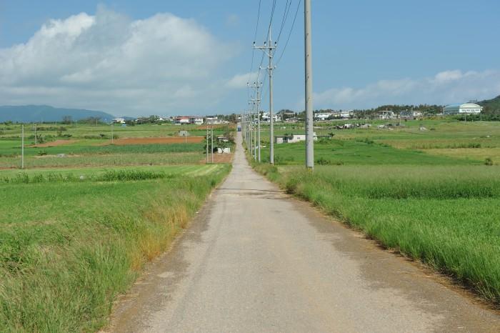 小浜島シュガーロード