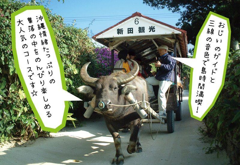 竹富島水牛車観光人気NO.1